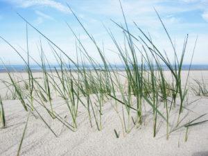 einsichten strand gras